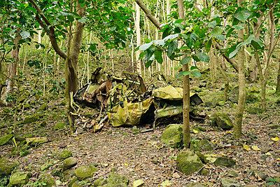 Waipio Valley, Hawaii - p1196m1000664 by Biederbick & Rumpf