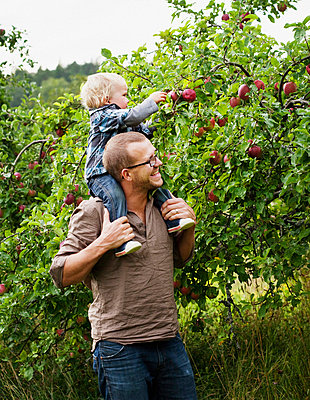 Father picking apples with his young son - p312m670273f by Matilda Lindeblad