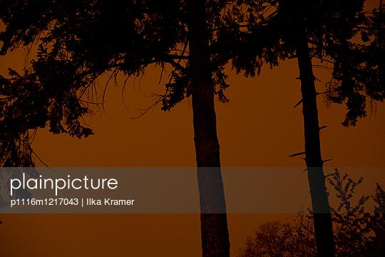 Zwei Bäume am Abend - p1116m1217043 von Ilka Kramer
