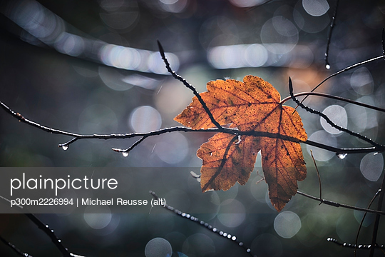 Tree branch with single leaf in autumn - p300m2226994 by Michael Reusse (alt)