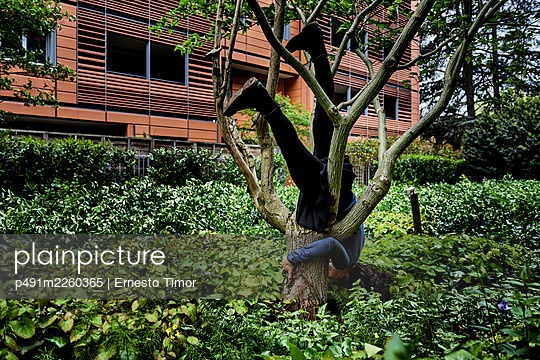 Woman upside down in the tree - p491m2260365 by Ernesto Timor