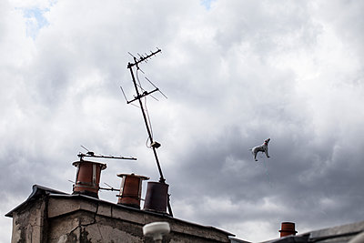 Flying dog - p856m1171204 by Pierre Baelen