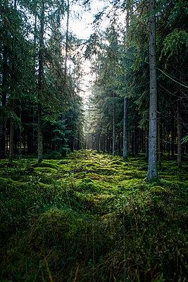 Wald - p947m945798 von Cristopher Civitillo