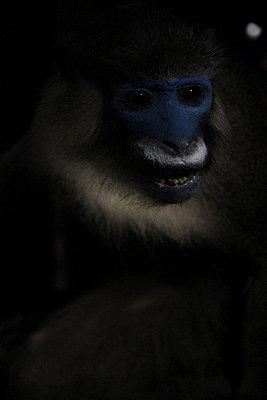 Monkey - p9690014 by Alix Marie