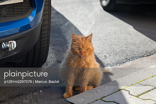 Cat on the street - p1291m2297078 by Marcus Bastel