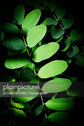 Green leaves - p1149m1474755 by Yvonne Röder