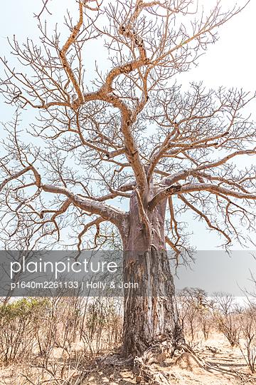 Abgestorbener Baum in der Wüste - p1640m2261133 von Holly & John