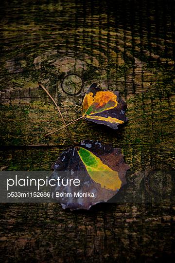 Herbstblätter - p533m1152686 von Böhm Monika