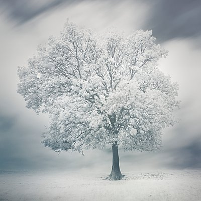 Infrared photography, Blossoming tree - p1137m2257877 by Yann Grancher
