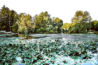 Lake overgrown with water lilies - p1312m2269997 by Axel Killian