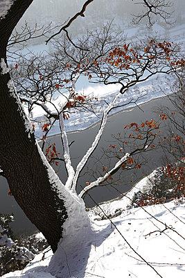 Germany, Saxony, Elbe Sandstone Mountains, Bastei area in winter - p300m2059034 by Thomas Jäger