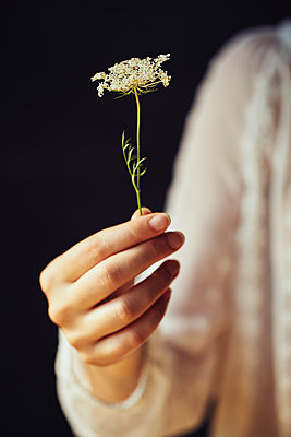 Woman holding wild flower - p968m2020228 by roberto pastrovicchio