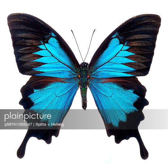 Metamorphose - p587m1055247 by Spitta + Hellwig