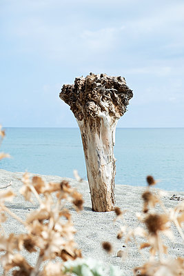 Trunk on the beach - p1423m2020598 by JUAN MOYANO