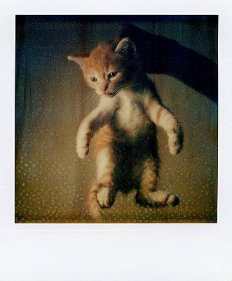 Kätzchen - p9111836 von Jeff Roques