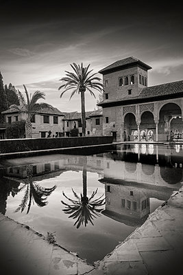 Reflection of palm tree in Alhambra pool - p1445m2150453 by Eugenia Kyriakopoulou