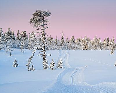 p312m1570516 von Mikael Svensson