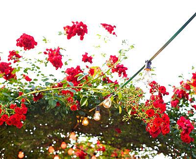 Rosentor II - p606m822709 von Iris Friedrich