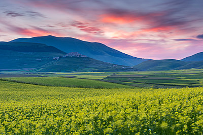 Flowering lentils on the Piano Grande, looking towards Castelluccio di Norcia, sunset, Monte Sibillini, Umbria, Italy, Europe - p871m1583744 by Robert Canis
