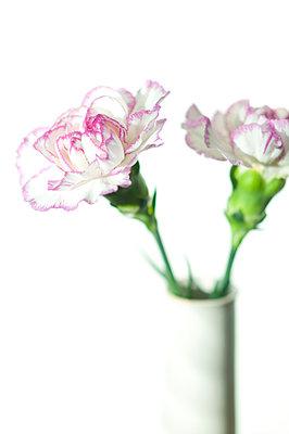 Nelken in der Vase - p310m890468 von Astrid Doerenbruch