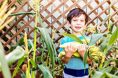 Mixed race boy picking corn in garden - p555m1411245 by Adam Hester