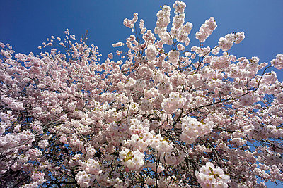 Blossom - p5560176 by Wehner