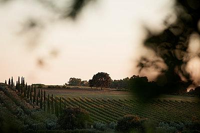 Sanfte Hügel - p1204m1094315 von Michael Rathmayr