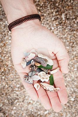 Strandgut in der Hand - p1273m1496174 von melanka