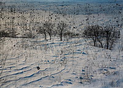 Winterlandschaft - p1649m2253068 von jankonitzki