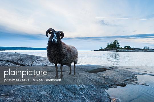 p312m1471421 von Mikael Svensson