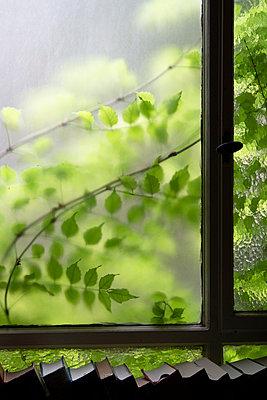 Blätter durch eine Milchglasscheibe - p1650m2231574 von Hanna Sachau