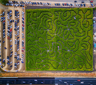 Corn Maze, Petaluma Pumpkin Patch, an aerial view of the maze, hedges and paths. Cars parked.  - p1100m1216196 by Mint Images
