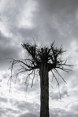Dead tree - p1228m1332844 by Benjamin Harte