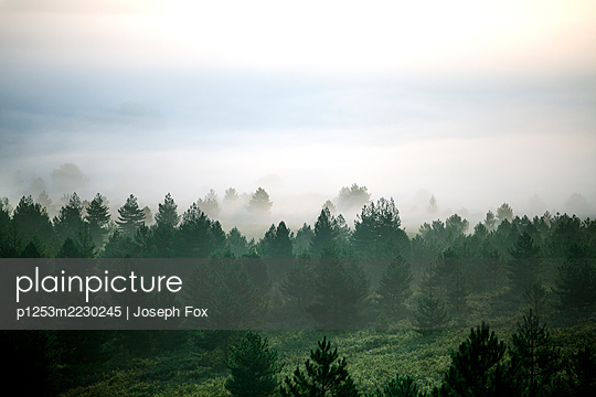Spain, Cantabria, Forest and Mist - p1253m2230245 by Joseph Fox