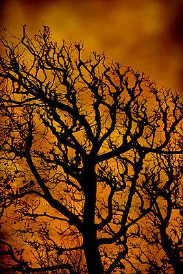 Gnarled plane tree, Paris, France - p1028m2230447 by Jean Marmeisse