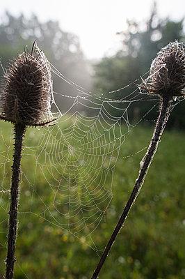Spinnennetz - p1412m1588817 von Svetlana Shemeleva