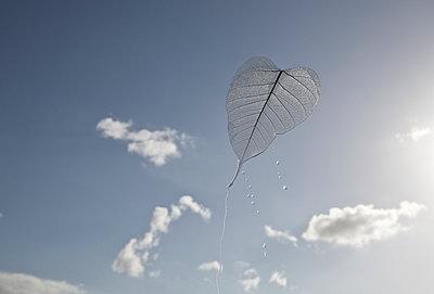 Wet leaf - p1670m2253291 by HANNAH
