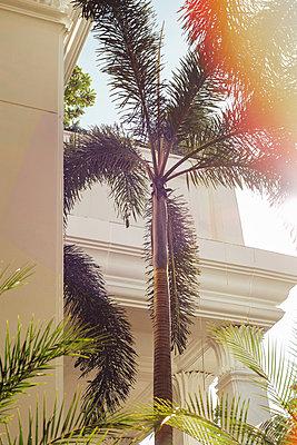 Villa in Bangkok - p728m1026533 by Peter Nitsch
