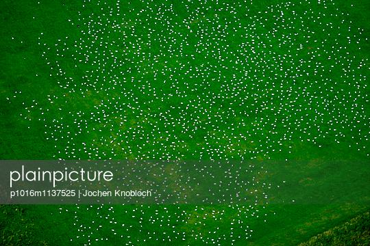Flock of gulls - p1016m1137525 by Jochen Knobloch