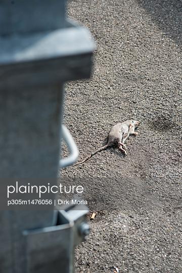 An der Mülltonne - p305m1476056 von Dirk Morla