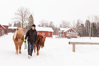 Senior man walking with ponies - p312m2092068 by Susanne Kronholm