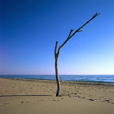 Dead tree - p8130028 by B.Jaubert