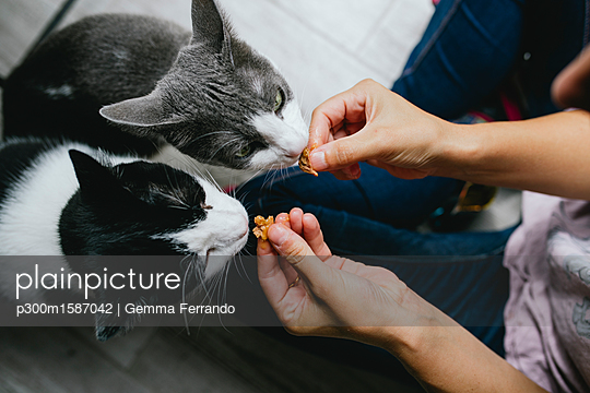 Woman feeding two cats at home - p300m1587042 von Gemma Ferrando
