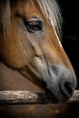 Pferdeportät - p1275m2210252 von cgimanufaktur