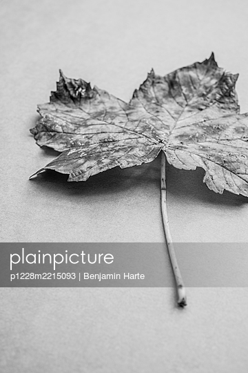 Autumn leaves - p1228m2215093 by Benjamin Harte