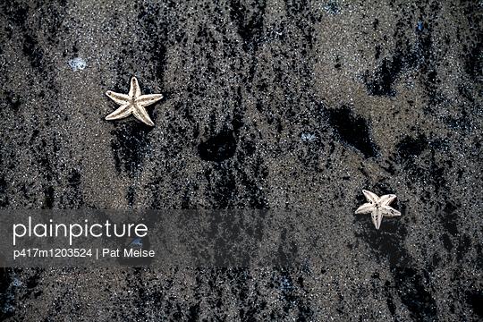 Seestern - p417m1203524 von Pat Meise