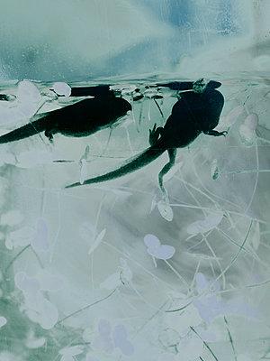 Freischwimmen - p1279m1162992 von Ulrike Piringer