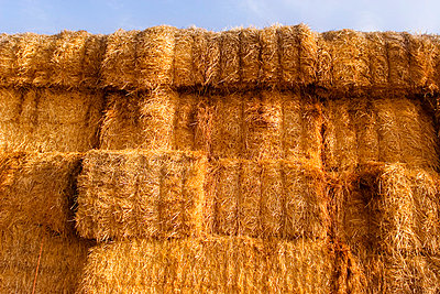 Hay Bales - p4423328f by Design Pics