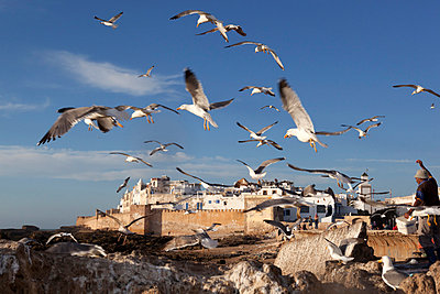 View to the ramparts and medina with seagulls - p871m861651 by Stuart Black