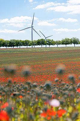 Mohnfeld mit Windkraftanlagen - p1079m1184963 von Ulrich Mertens
